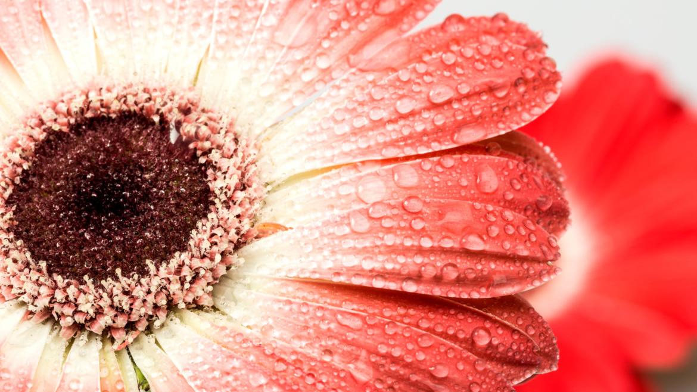 花*花のホームページに表示される花の絵について